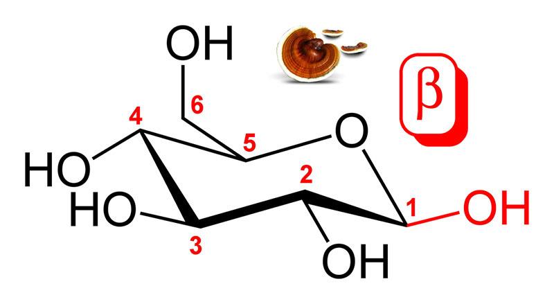 thành phần của nấm linh chi