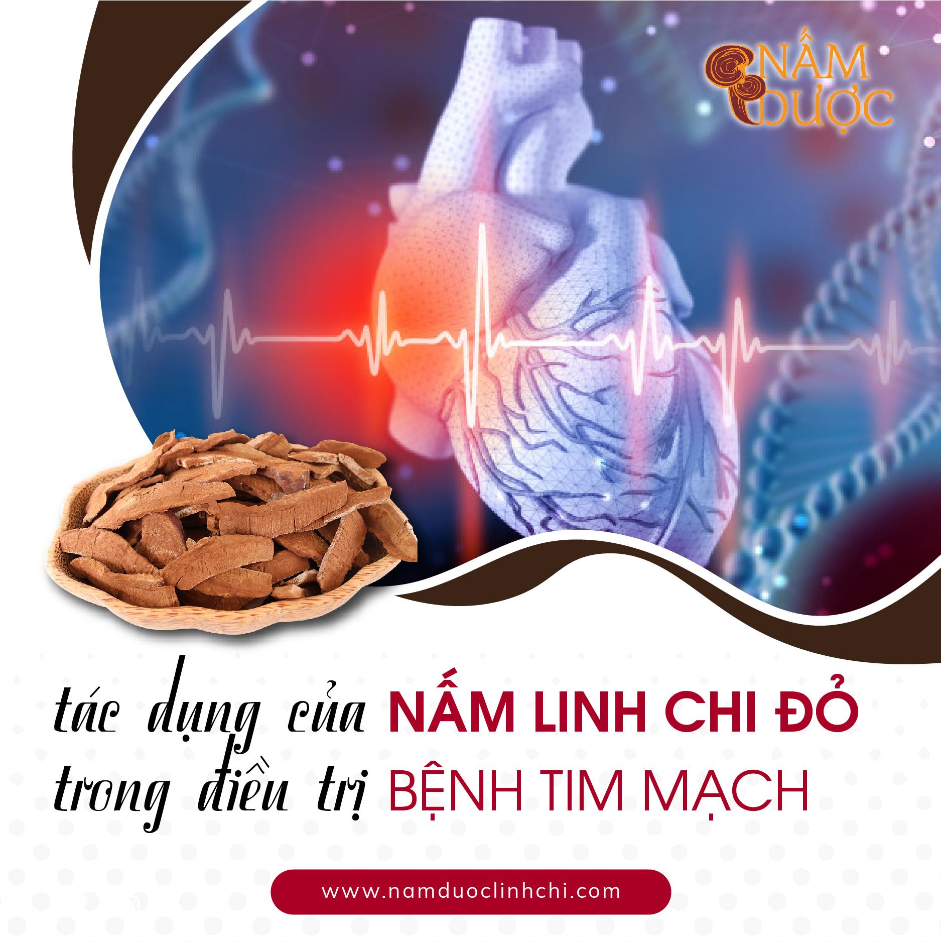 Tác dụng của nấm Linh Chi trong điều trị bệnh tim mạch